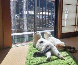 anti-cafe-cat-house-kiev